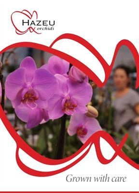 Hazeu Orchids